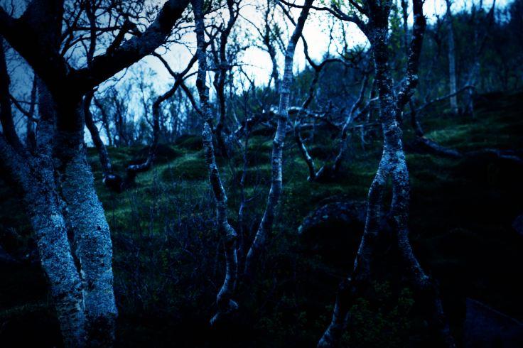 bäume_anstieg_Berg