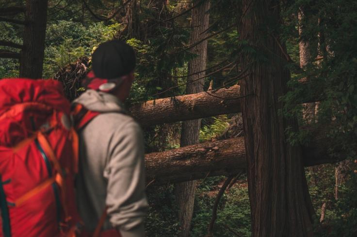 Jim_Kopf_in_den_Wäldern_Vancouver_Island_Blog.jpg