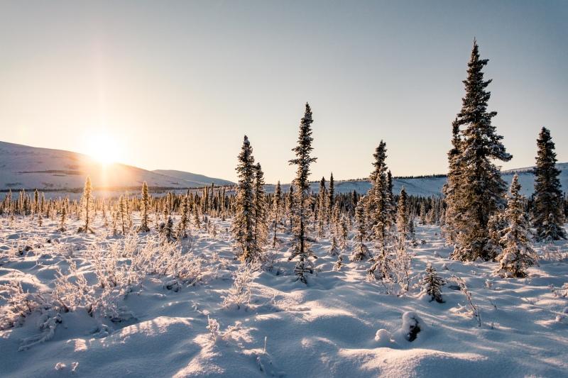 Ein Urlaub in Alaska im Winter