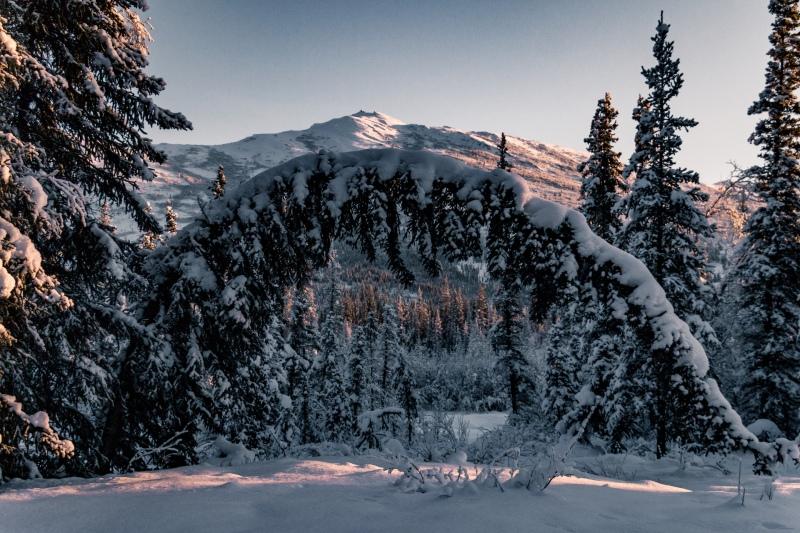 Eine Reise nach Alaska im Winter in den hohen Norden nach Coldfoot