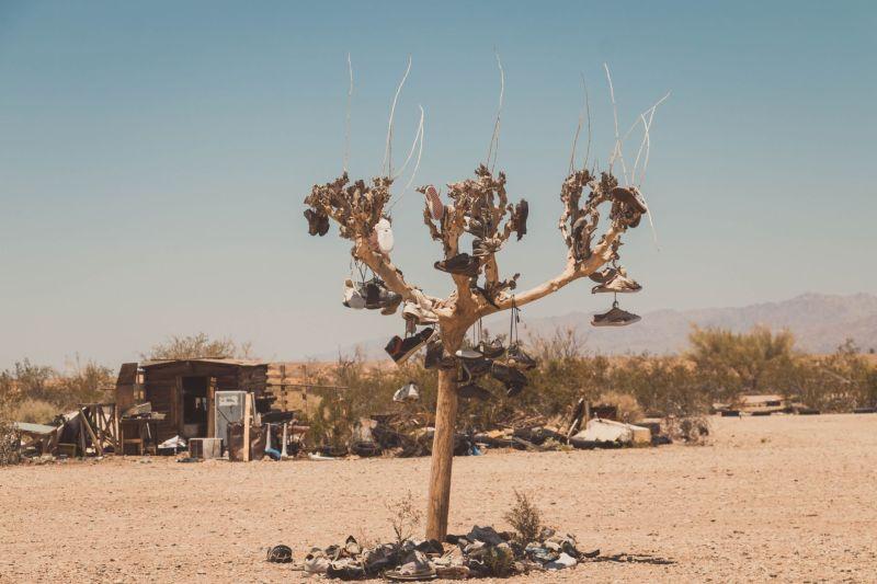 Schuhe hängen an einem Baum in der Wüste