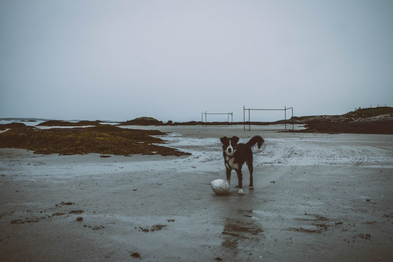 Hund am Meer will spielen in Irland