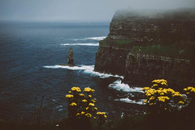 Blüten und Blümen an den Cliffs of Moher in Irland an der Küste