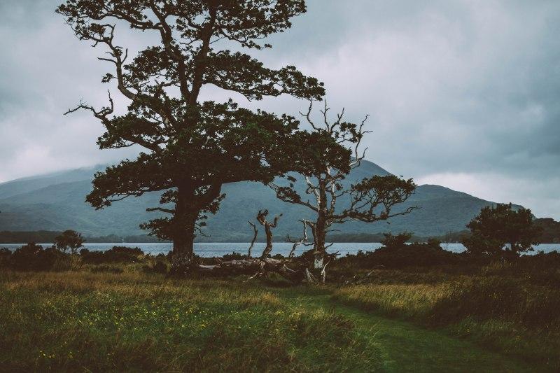 Bäume und Wiesen vor einem Berg in der Natur von Irland