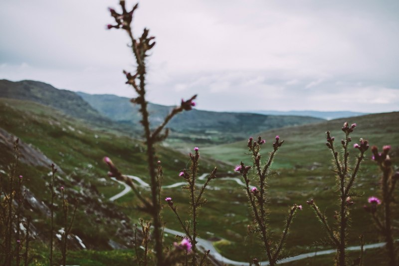 Vegetation und Blüten in der Landschaft von Irland
