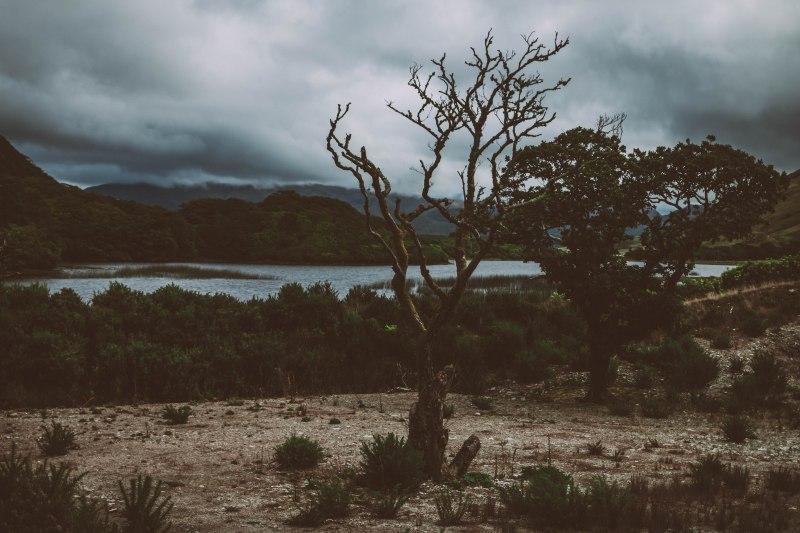 Ein Baum im Herbst an einem See in Irland